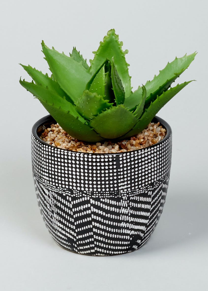 Aloe in Patterned Pot (12cm x 10cm)