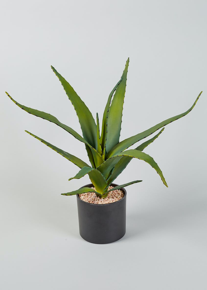 Agave Plant (50cm)