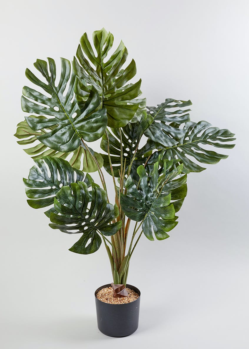 Cheese Plant in Pot (90cm x 60cm)