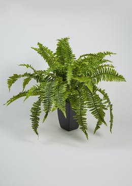 Fern in Plant Pot (50cm x 40cm)