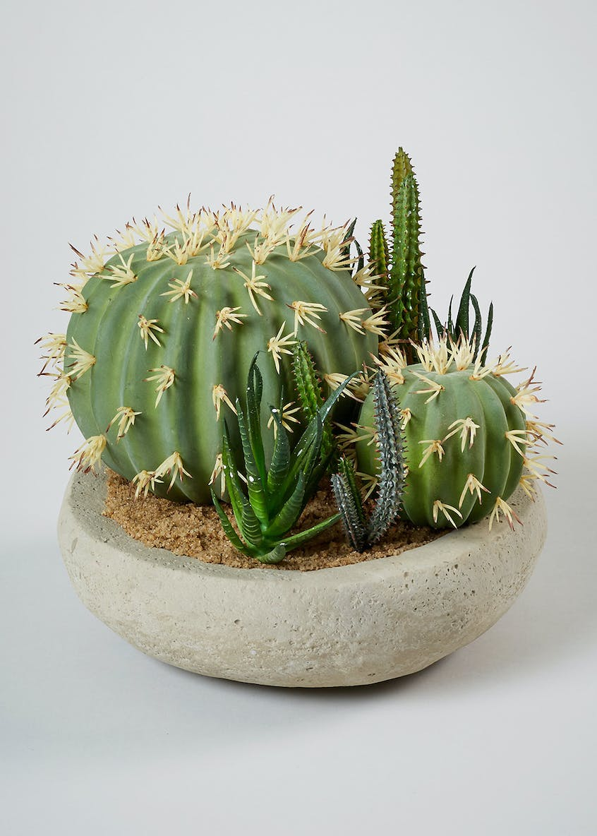 Cacti in Cement Bowl (23cm)