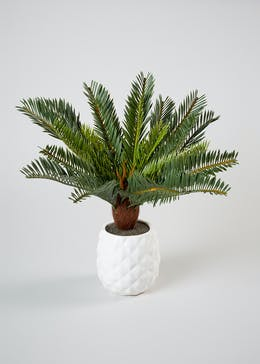 Cycas in Textured Pot (40cm)