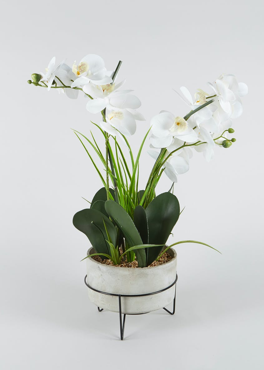 Orchid in Potted Stand (60xm x 40cm)