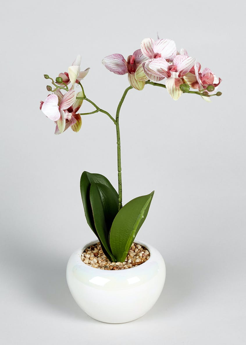 Orchid in Bowl