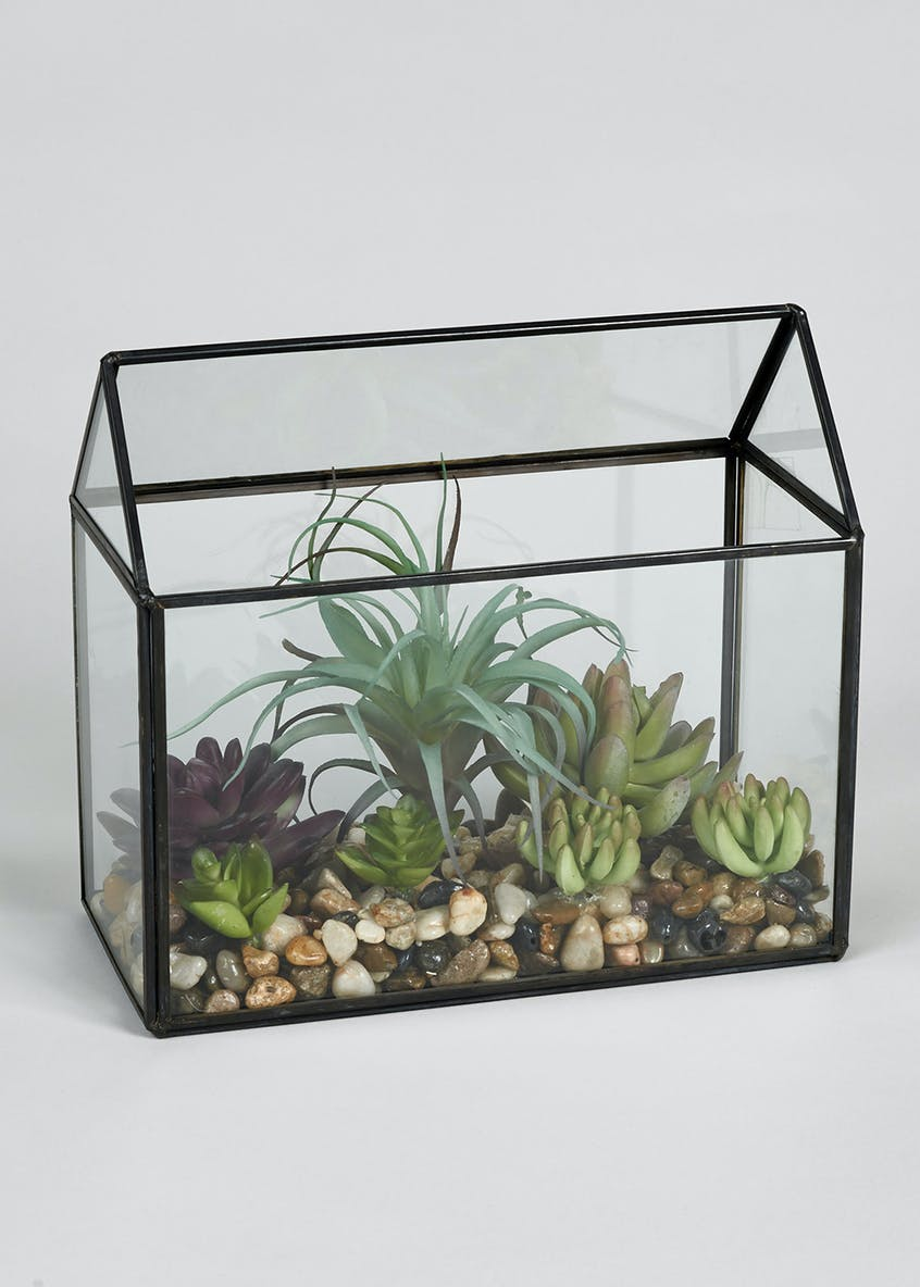 Plants in Glass Terrarium (23cm x 20cm x 11cm)