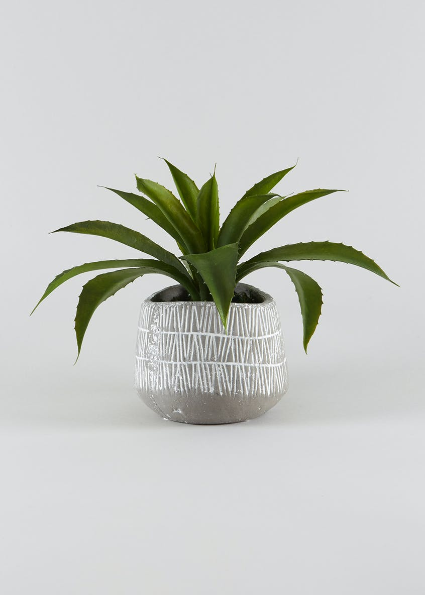Aloe Plant in Cement Pot (23cm x 14cm x 14cm)