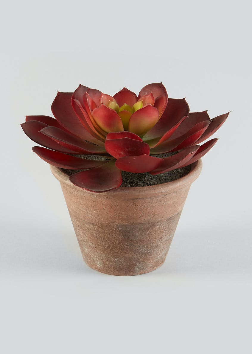 Succulent in Pot (23cm x 18cm)