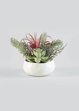 Frosted Succulent in Pot (12cm)
