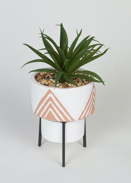 Plant in Glazed Pot (25cm x 13cm x 13cm)