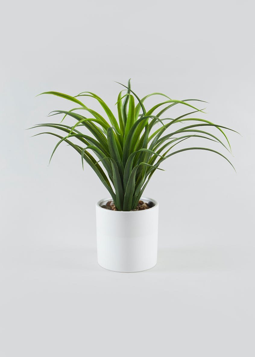 Grass Plant in Pot (40cm x 40cm x 40cm)