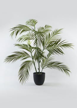 Fern Tree in Pot (90cm x 60cm x 60cm)