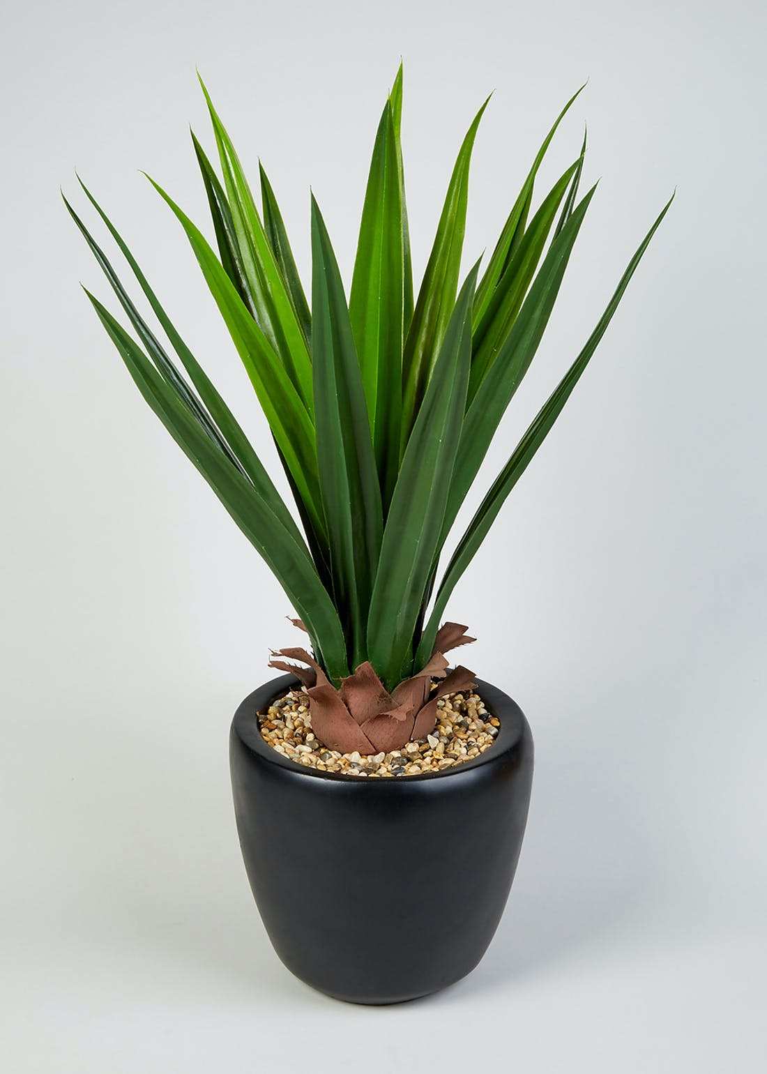 Large Agave Plant in Pot (90cm x 60cm)