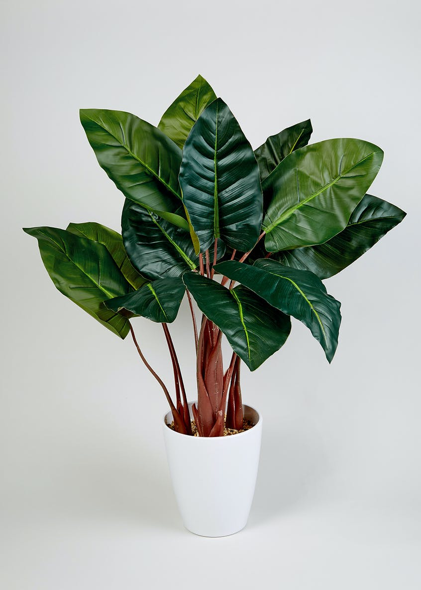 Elephant Ear Plant in Pot (95cm)