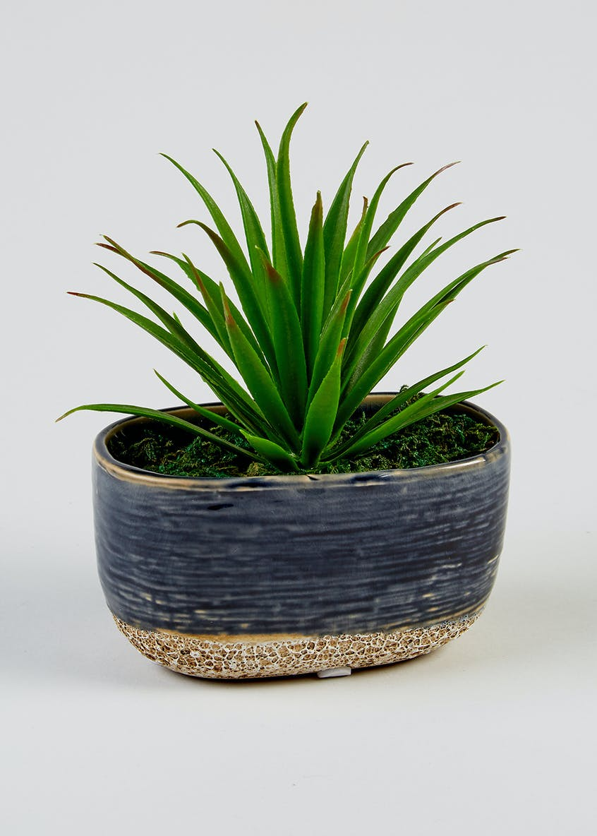 Mini Palm Tree in Pot (17cm x 14cm x 13cm)