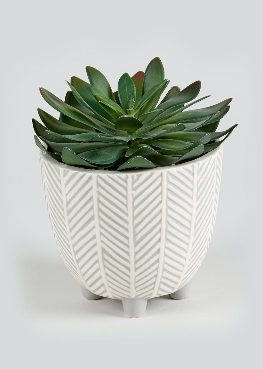 Succulent in Herringbone Planter