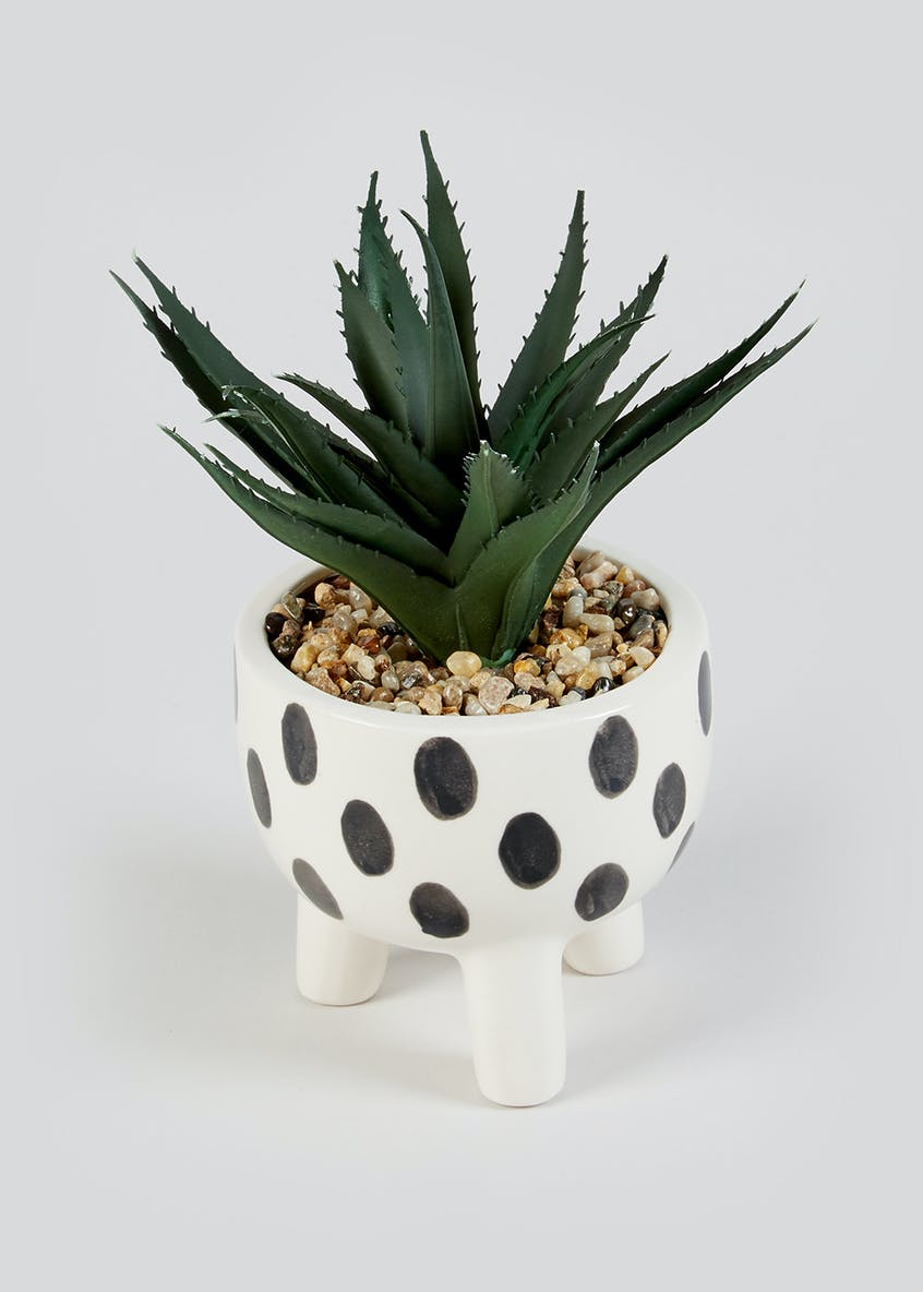 Aloe in Spot Print Footed Planter