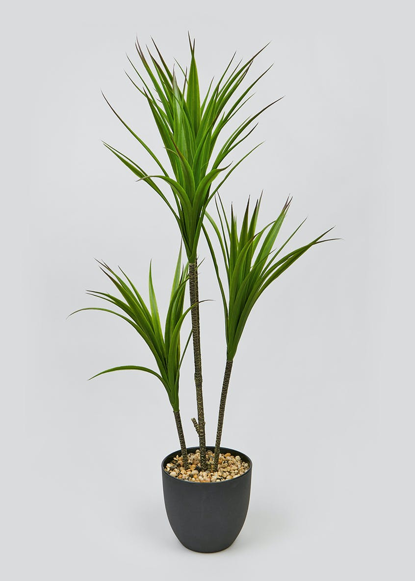 Tall Yukka Tree in Pot (95cm)
