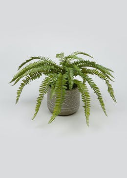 Fern Plant in Pot (60cm x 60cm x 45cm)