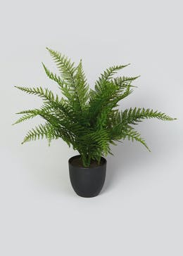 Fern Tree in Pot (62cm x 60cm x 60cm)
