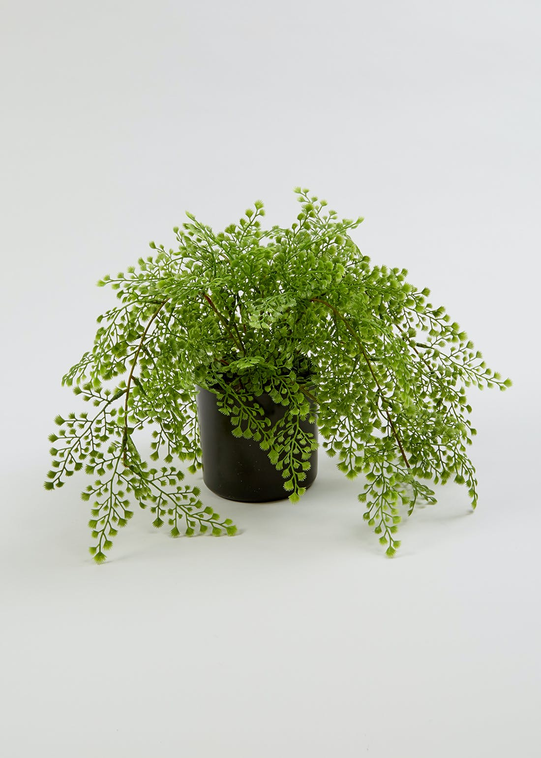 Maidenhair Plant in Pot (45cm x 45cm x 28cm)