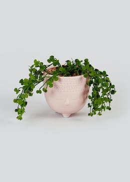 Trailing Succulent in Face Planter (27cm x 10cm)
