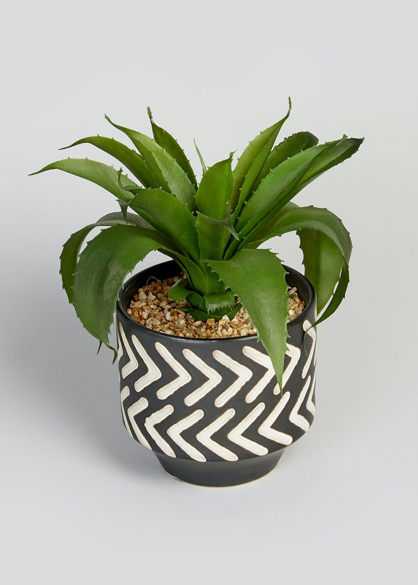 Aloe in Patterned Pot (29cm x 27cm)