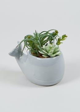 Succulents in Whale Planter