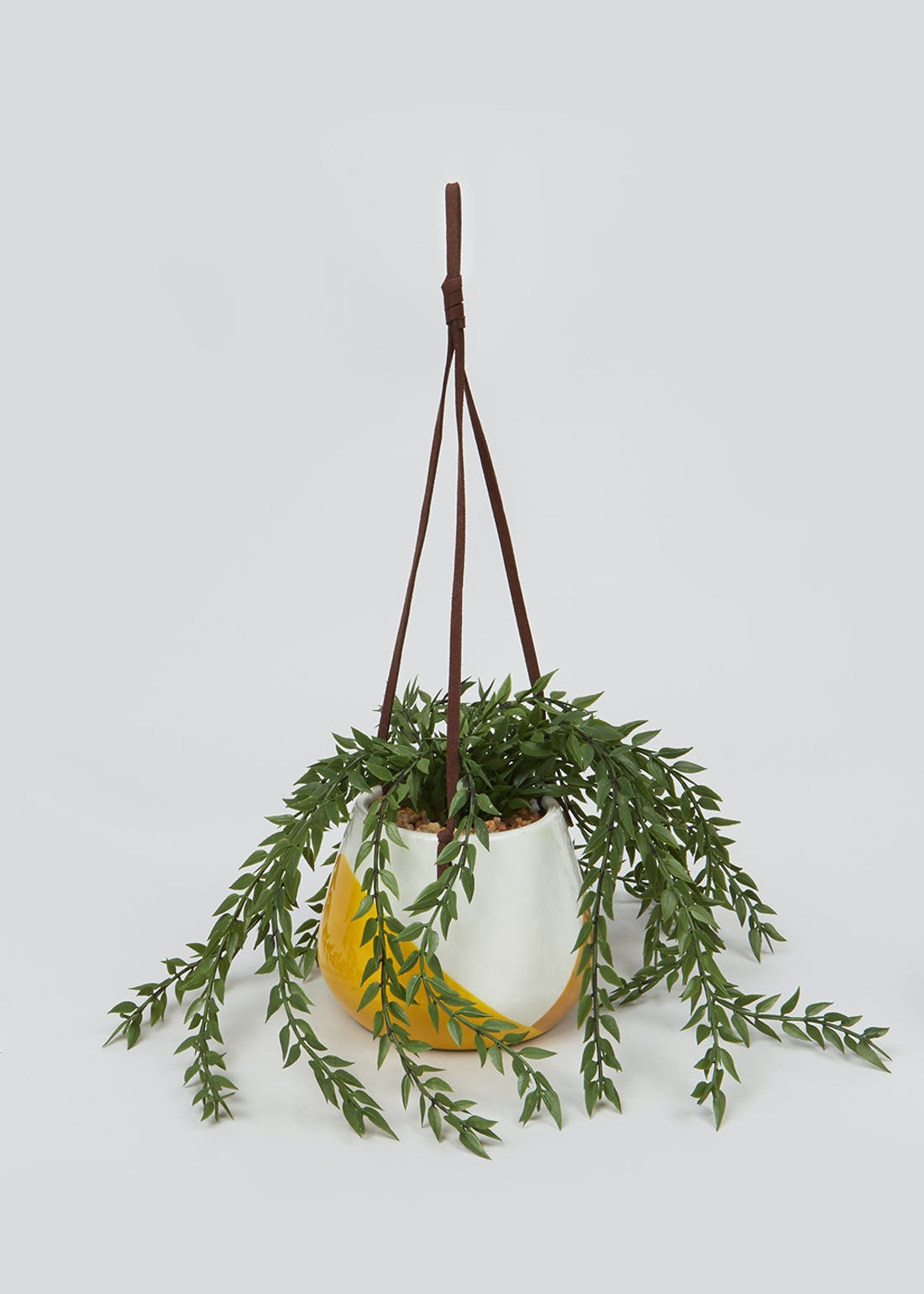 Plant in Painted Hanging Planter (35cm x 14cm)