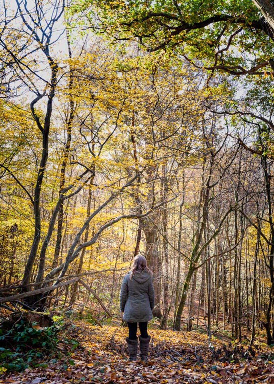 Virgin Experience Days Forest Bathing for 2
