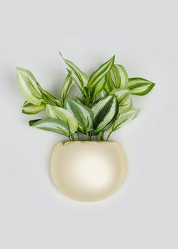 Plant in Ceramic Wall Pot (21cm x 12cm x 5.5cm)
