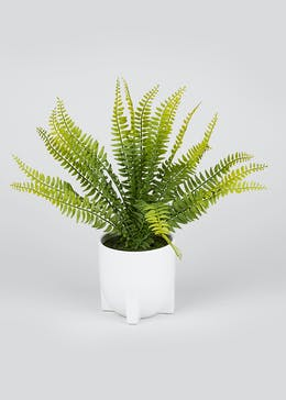 Fern in Ceramic Pot (42cm x 16cm x 16cm)