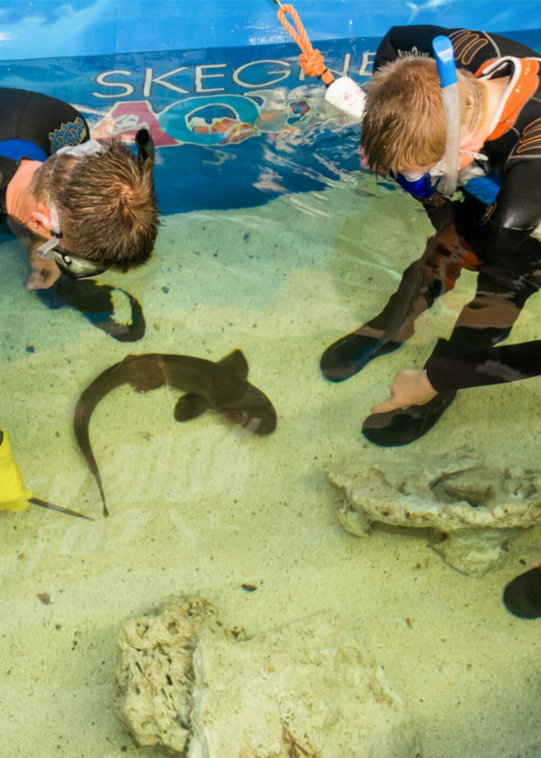 Virgin Experience Days Junior Snorkel with Baby Sharks at Skegness Aquarium